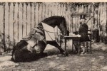 duras-rouhet-cheval-jument-16