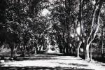 sainte-foy-jardin-public-piscinel-18