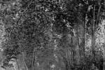 sainte-foy-jardin-public-piscinel-63