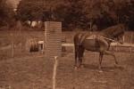 duras-rouhet-cheval-jument-22