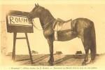 duras-rouhet-cheval-jument-4