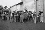 jugt bétail 12 79 (Copier)
